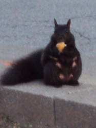 LOL. It's a Squirrel eating a piece of cheese by FUTURELISA1