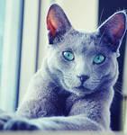 Blue Cat IV by DragonOfLust