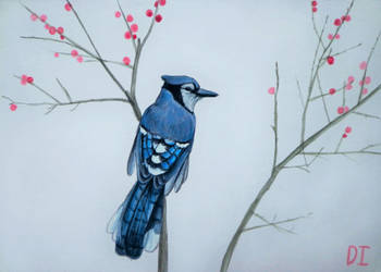 Blue jay by Anaitmarihel