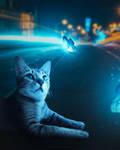 Cat Fantsay