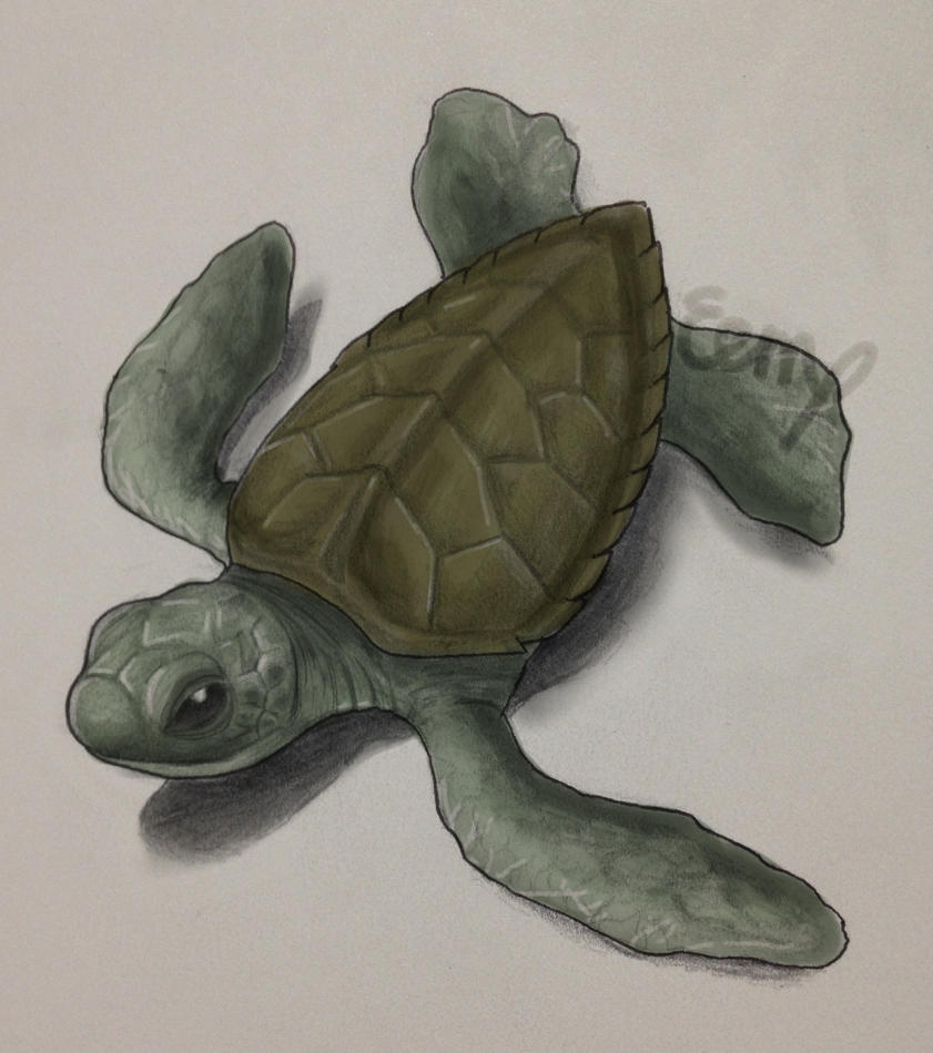 Baby Sea Turtle quick relaxing color sketch by EemsArt on DeviantArt