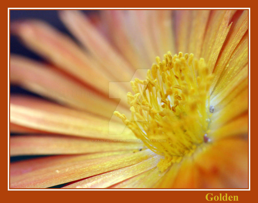 Golden by painting-with-light