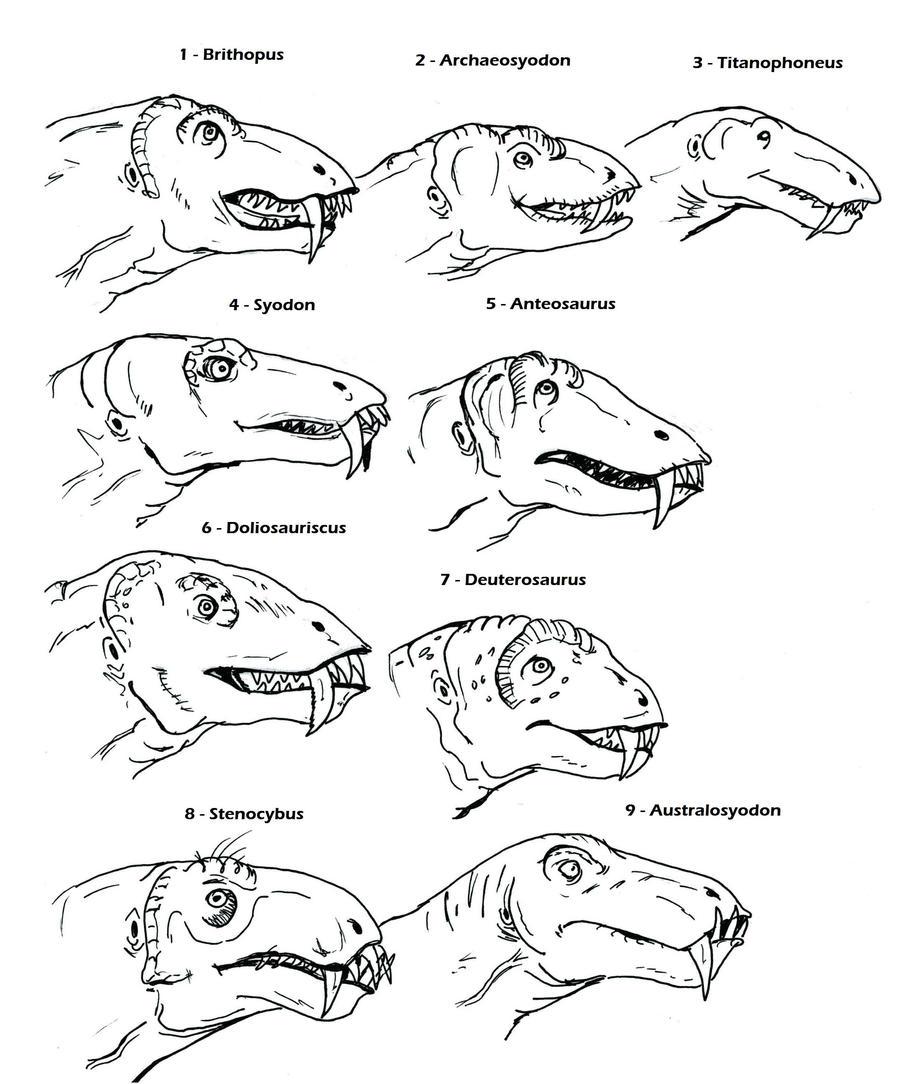 Dinocephalia Brithopodidae