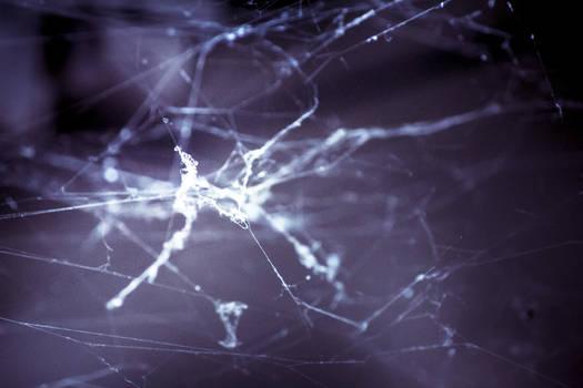 Cobweb 07