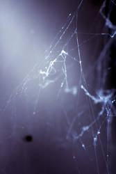 Cobweb 08