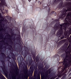 Texture 05