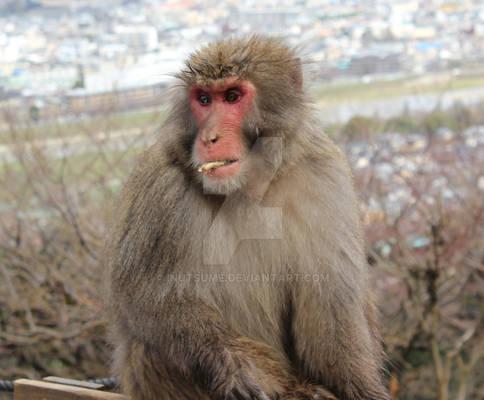 Monkey in Arashiyama