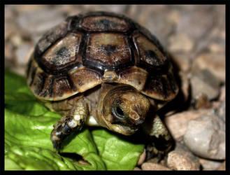 Little Turtle by paulosanlazaro