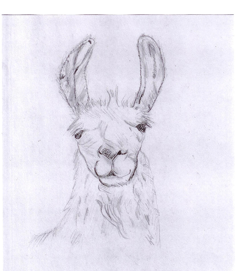 Llama Sketch by allixson