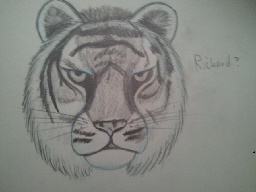 Pencil tiger head by BabyGryphon on DeviantArt