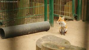 Foxy Playground by B-JacobDawson