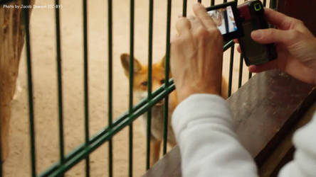 Photogenic Fox by B-JacobDawson