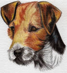 Jack Russell Terrier by sassie-kay