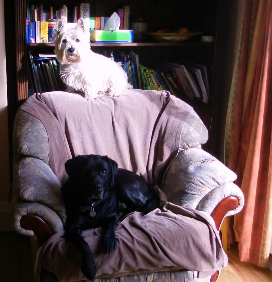 West Highland Terrier And Black Labrador By BAMF-in-a