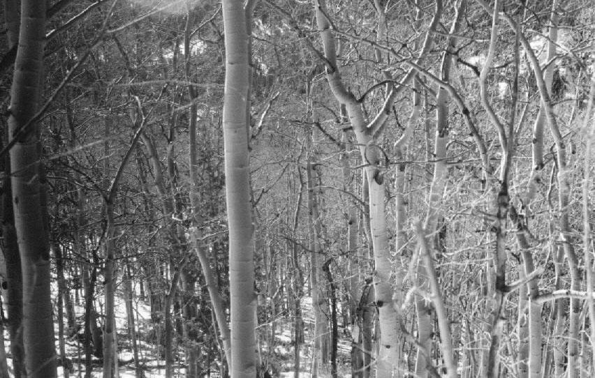 aspen wonderland by h wood on deviantart