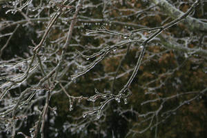 Frozen Branches Stock by AliDee33