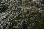 Frozen Branches Stock