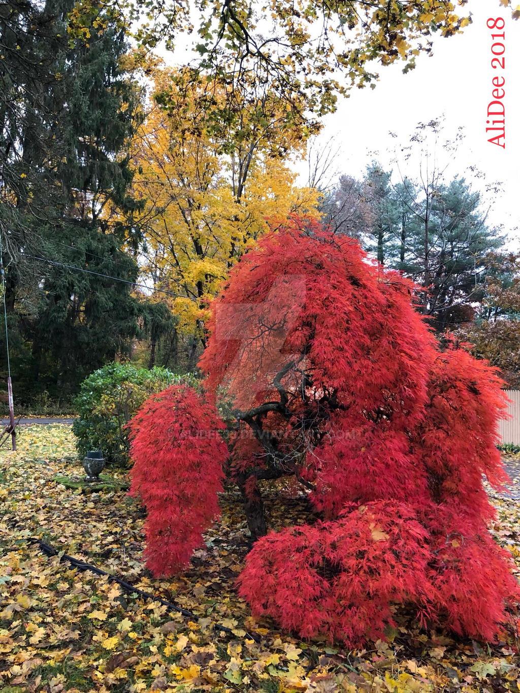New England Fall Foliage by AliDee33