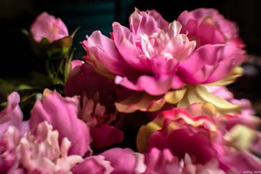 Pink Peonies by AliDee33