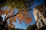 Fish-Eye Foliage in the City