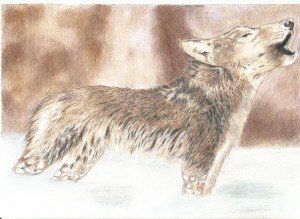 Wolfs-sister's Profile Picture