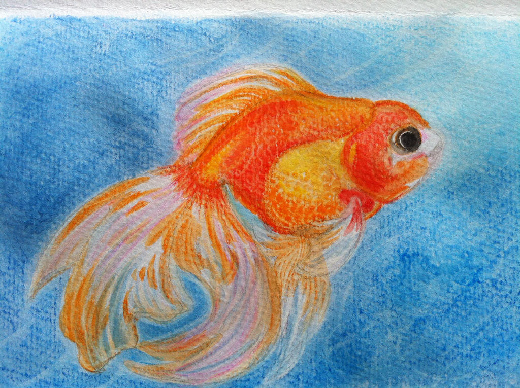 Goldfish by CeruleanHeavens