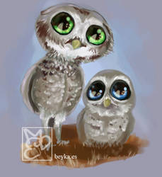 Owls by Beyka