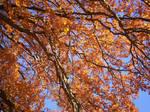 Autumn Colours-1