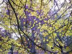 Autumn Colours-3