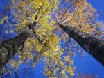 Autumn Colours-8
