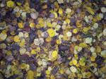 Autumn Colours-9