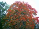 Autumn Colours-13