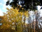 Autumn Colours-21