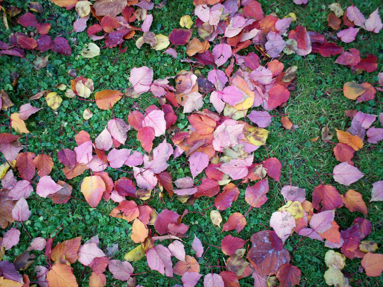 Autumn Colours-26