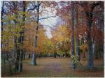 Autumn Forest-8