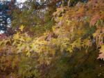 Autumn Colours-31
