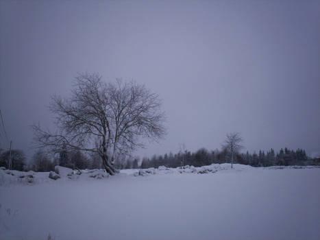 Winter Landscape-3