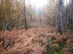 Autumn Forest-18