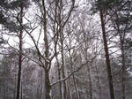 Winter Forest-37