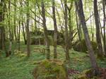 Spring Forest-27