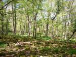 Spring Forest-35