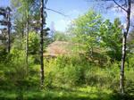 Spring Landscape-17