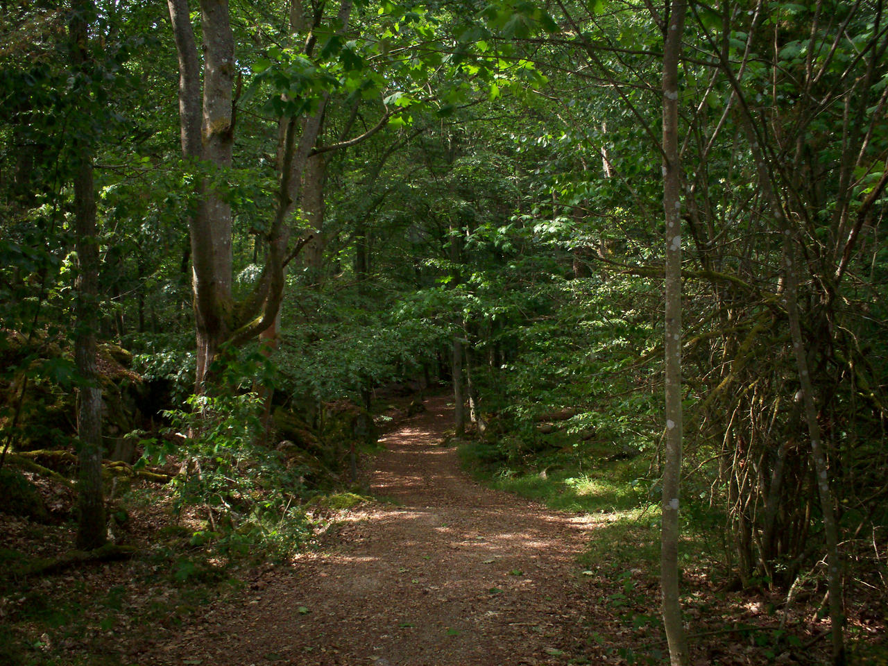 Into the Forest-2