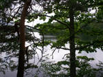 Forest Lake in the Summer-24