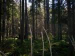 Autumn Forest-22