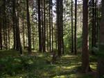 Autumn Forest-25