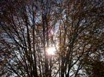 Autumn Colours-47