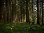 Autumn Forest-28