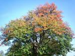 Autumn Colours-49