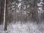 Winter Forest-42